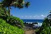 Sideways tree (emjaune) Tags: keannae pennisula tree beach lavarocks maui