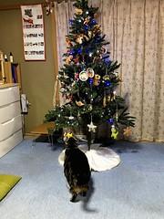 Enjoying the Christmas Tree (sjrankin) Tags: japan hokkaido yubari ornaments christmastree christmas tigger cat animal animatedgif gif autogenerated edited 16december2017