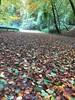 Location d'autunno. (esterinaeliseo1) Tags: alberi sottobosco bosco foglie autunno strada