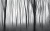 Barcode (Sarah_Brooks) Tags: woods icm woodland forest fog mist landscape bw mono somerset