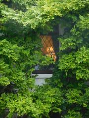 DSCN5464 (Marcin Lichowski) Tags: ireland irish countykilkenny marcinlichowski lichowski style europe green