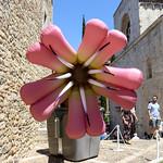 Temps de flors_0116 thumbnail