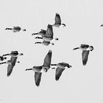 Migration-9532 thumbnail