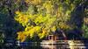 (805/17) Otoño en al Capricho (Pablo Arias) Tags: pabloarias photoshop photomatix capturenxd españa parque árbol otoño amarillo patos hierba elcapricho madrid comunidaddemadrid