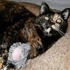 Bonsai with toys (noisy__nisroc) Tags: cat pet tortoiseshell bonsai mobil