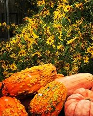 Fall Flowers 2017 - 2 (booboo_babies) Tags: pumpkins flowers garden autumn autumncolors fall nursery