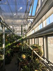 (Cjin99) Tags: providence rhodeisland unitedstates us tree ri brownuniversity greenhouse