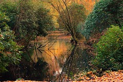 Autumn thoughts (dirk.mateboer) Tags: forest bos heemstede nederland netherlands herfst landschap landscape natuur nature trees bomen water pool vijver groen green bladeren leaves park flora autumn