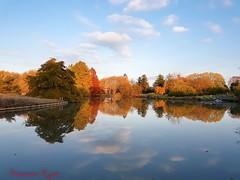 Parc floral à Bordeaux 19.11.2017 (Ezzo33) Tags: france nouvelleaquitaine bordeaux ezzo33 sony explore parc jardin 2017 automne paysage s7