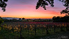 (--marcello--) Tags: santamariadegliangeli assisi umbria vineyard vigneto vine landscape nature sunset tramonto autumn