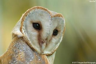 Barn Owl!! (_EJ1C0198)