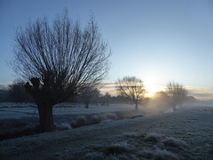 Morning Sun (Gilder Kate) Tags: richmond richmonduponthames richmondpark roehampton london panasoniclumixdmctz70 panasoniclumix panasonic lumix dmctz70 tz70 beverleybrook mist misty morning frost frosty