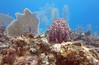 Cayman Brac (reneerwest) Tags: scuba fish beach caymanbrac