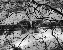 Grotesque woods (Francoise100) Tags: hiding ghoulish lategothicrevival smithyoungtower towerlifebuilding architecture facade building sanantonio trees texas tx usa bw bnw branches
