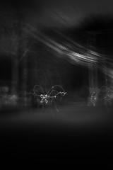 The Walk Home no.4 (SopheNic (DavidSenaPhoto)) Tags: fujinon35mmf14 blur street bnw icm bw xt2 fujifilm lowkey trees impressionisticphotograph monochrome intentionalcameramovement impressionism home halloween blackandwhite acros mono walk