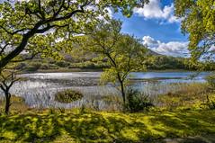 DSC_5476 (randy.quayle) Tags: county galway randyquayle kylemoreabbey ireland renvyle