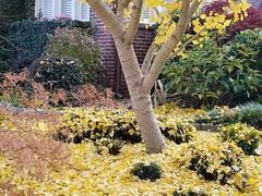 Walks Piedmont Park - 43 (Laura Grace) Tags: 2017 afternoon atl atlanta autumn beauty fall ga georgia november solowalkshikes virginiahighland walksandhikes