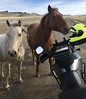 Close up and personal.  In Montana (montanatom1950) Tags: montana horses motorcycle motorcycletouring