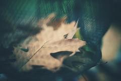prison break (christian mu) Tags: depthoffield dof bokeh leaves autumn germany muenster münster fahrrad fahrradhauptstadt fahrradstadt fahrradkorb bike bikebasket sonya7ii sony 35mm 3514 zeiss distagon3514 distagon christianmu