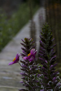 In the evening the flowers look down the path to the vanishing point