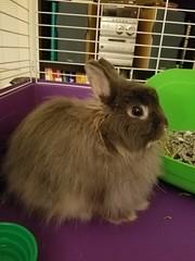 Max (Pinky Earl) Tags: rabbit bun bunny conejo usagi lapin