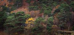 Yellow Tree Glendalough (burgootim) Tags: ireland autumn fall colours wicklow glendalough