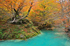 A world of colours (Hector Prada) Tags: bosque otoño rio hojas agua rocas árbol urederra color forest autumn river leaves water rocks tree fall colours navarra