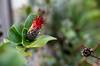 Botanische Schönheiten (Silaris Inc.) Tags: nahaufnahme bokeh pflanze blühen blüte freigestellt depthoffield natur dof bochum nordrheinwestfalen deutschland de