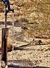 Pumping water in the desert (Starkrusher) Tags: redrockcanyon california rabbits desert