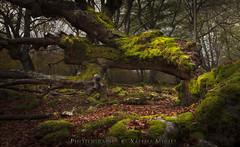 Rincones...... Opacua. (Xálima Miriel) Tags: opakua musgo otoño