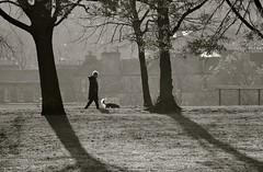 Winter Walk (Edinburgh Photography) Tags: nature landscape outdoors walking woman dog trees winter morning light monochrome black white inverleith park nikon d7000 documentary photojournalism hanks bruno