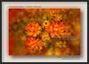 Flower-Collection-DSC_6162 (fatima_suljagic) Tags: fineartprints melbourne melbournephotography nikond800 nature naturephotographer melbournephotographer australianphotographers australia landscapes landscapephotography