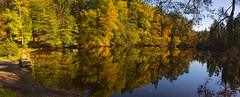 _T1A3603 Donoper Teich (idunavision) Tags: ostwestfalenlippe detmolddonoperteich forest pond beechtrees buchen canon leica olympus autumn fall herbst golden teich mushrooms fern