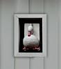 Aan de gevel (Roel Wijnants) Tags: ccbync roelwijnants roelwijnantsfotografie roel1943 decoratie gevel versiering wandelen wandelvondst hofstijl haagspraak acitytolove absolutelythehague city centrum leesdevoorwaardenvoorgebruik eend duck
