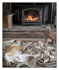 One Way to Stay Warm (GAPHIKER) Tags: buddy whippet heat fire fireplace wood burning stove chilly cold old skinny blanket bench cherry cherrytreelane copper wash tub ash bucket