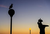 Sunset Silhouettes (NathalieSt) Tags: coucherdesoleil europe france hérault lagrandemotte languedocroussillon occitanie building city immeuble nikon nikond750 nikonpassion nikonphotography sunset ville bird birds seagull seagulls oiseau oiseaux goeland goelands street lights lampadaire luminaire coucher