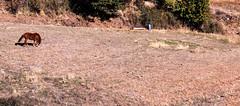 IMG_7073 (faysal Mnawar almusafir) Tags: trevelez lataha almusafir pitres alpujarra sierranevada