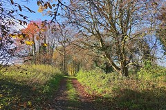 Nearly Bare (Deepgreen2009) Tags: clinging last few leaves bare autumn walk november sunny track path rural wood