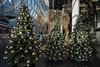 2017 Rentier mit Weihnachtsbäumen in MyZeil (mercatormovens) Tags: frankfurt myzeil city einkaufszentrum zeil innenstadt weihnachtsdekoration rentier weihnachtsbaum