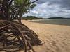 Praia do Amor (Rita Barreto) Tags: praia praiadoamor praiaderio ã¡guadoce amazã´nia alterdochã£o parã¡ nortedobrasil águadoce amazônia alterdochão pará