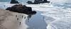 People at Ocean Beach (Matt McLean) Tags: california landsend sanfrancisco ocean beach surf pacific people