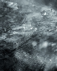 Wind and Rain Monochrome Preview (Charles Opper) Tags: canon hmbt icm intentionalcameramovement blackandwhite doubleexposure elemental impression leaves monochrome mood motionblur nature rain water wind