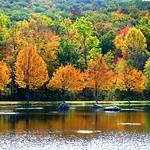 Beautiful Fall Trees thumbnail