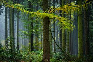 Herbstwald (4)