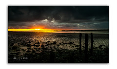 Wish I Had Wellies   [Explored] (RonnieLMills) Tags: dawn early morning sunrise daybreak low tide islandhill strangford lough wooden posts jetty comber newtownards county down northern ireland snapper photographer explore explored 51117 7