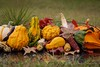 Colorful! (K.Yemenjian Photography) Tags: evans georgia unitedstates fall fruits fruitcollection closeup macro colors colorful dof depthoffield aperturepriority beautyofnature nature focus green redleaves corn indiancorn squash pumpkin leaves