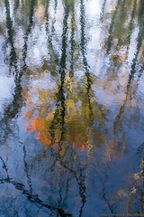 Autumn on the Canal (hilarybachelder) Tags: ngc autumn princeton nj fall canal reflection dr water mercer county orange impressionism tree foliage blue sky delaware raritan park golden hour season sony a7rii november 50mm