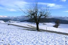 bei Metzgerhüsi Oberthal am 17.11.2017 (Martinus VI) Tags: oberthal möschberg emmental kanton canton de bern berne berna bernese berner automne schweiz suisse suiza switzerland svizzera swiss y171117 martinus6 martinus6xy martinusvi martinus