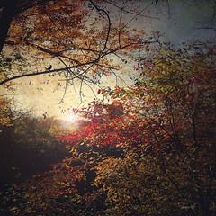 #Allegro Maestoso (graceindirain) Tags: foglie giallo verde rosso yellow green red leaves november autumn textured graceindirain