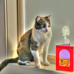 Happy Bubbles Day (swong95765) Tags: cat hdr bubbles card confused confusion feline sill stare window